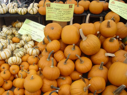 Farmer's Market Pumpkins