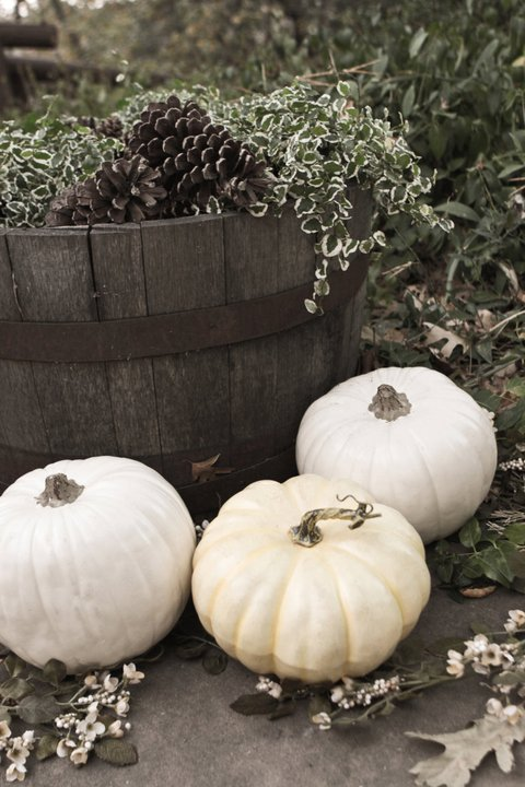White Wedding Pumpkins