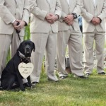 dog-at-wedding-ceremony-590x401