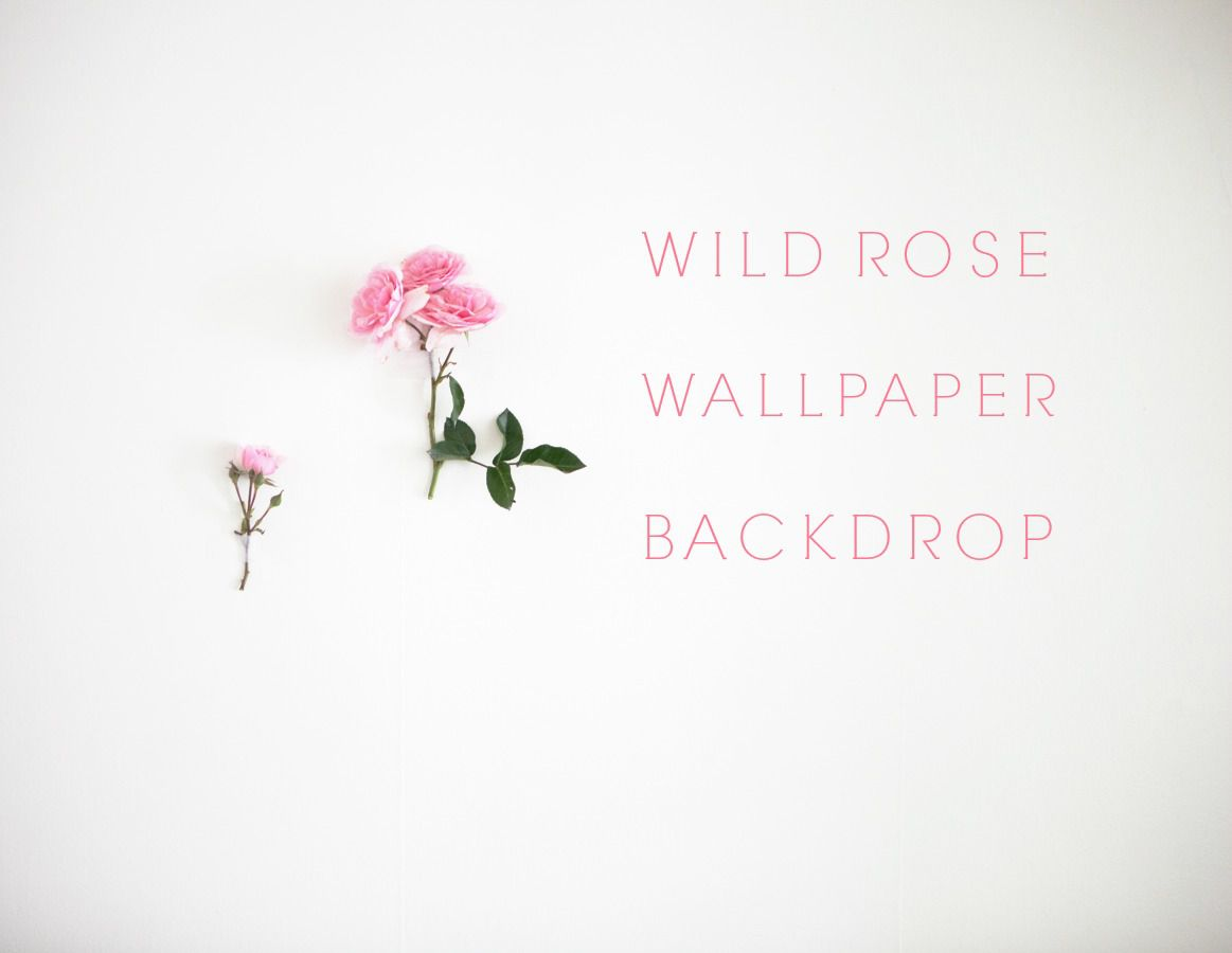 How To Create Your Own Wild Rose Wallpaper