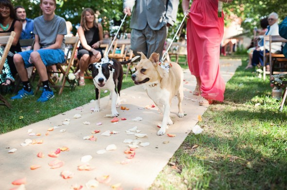 The couples dogs at the ceremony