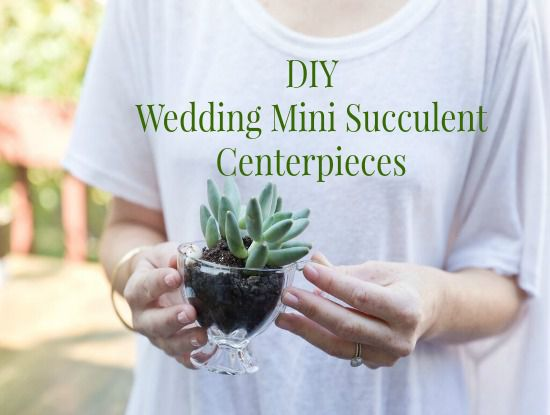 DIY Wedding Succulent Centerpieces